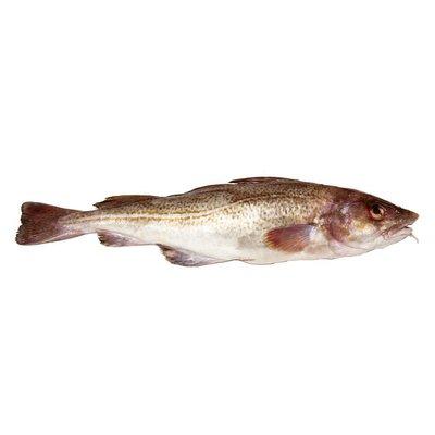 Whole Cod