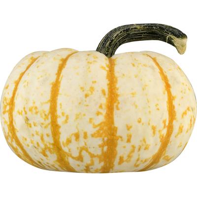 Bay Baby Produce Pumpkin, Tiger Stripe