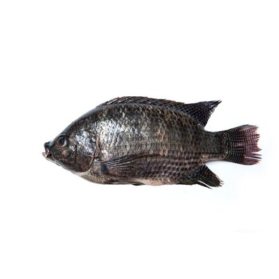 Fresh Whole Red Tilapia