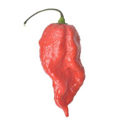 Scorpion Pepper