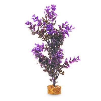 Black & Purple Image Large Plant