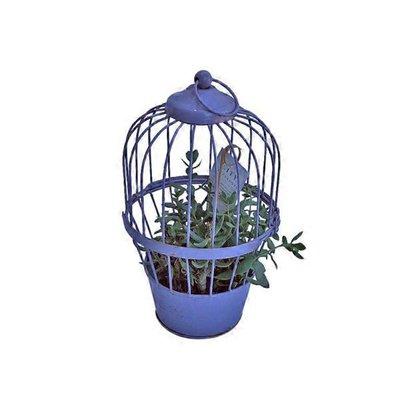 """12"""" Succulent Bird Cage"""