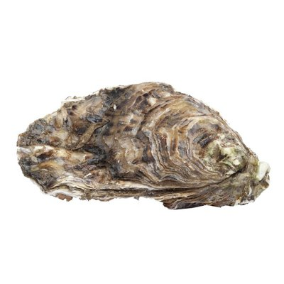 Assi Oysters