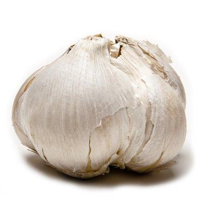 Tagd Elephant Garlic Bulbs