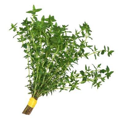 Infinite Herbs Organic Thyme