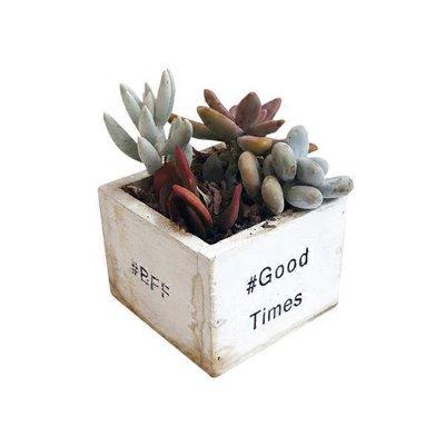 """Group 3 Succulent Plants 4"""""""