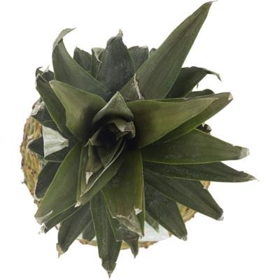 Del Monte Pineapple, Extra Sweet