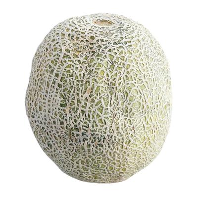 Organic Cantaloupe Melon