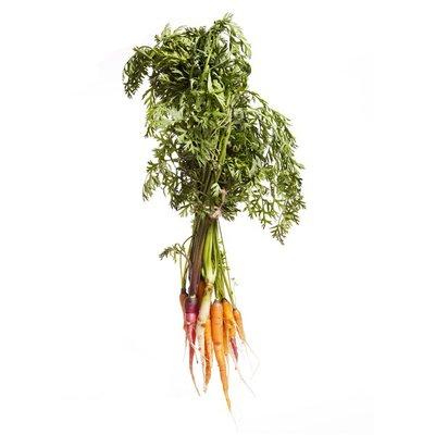 Rainbow Carrot Box
