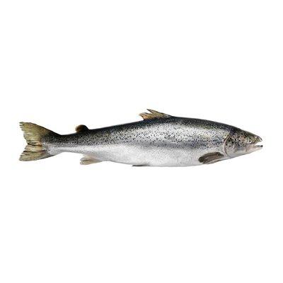 Fresh Salmon Portions Farm-raised, 6 oz.