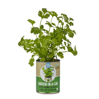 Back to the Roots Garden in a Can Cilantro