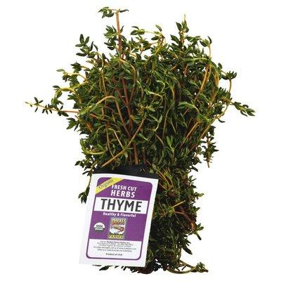 Rocket Thyme, Organic