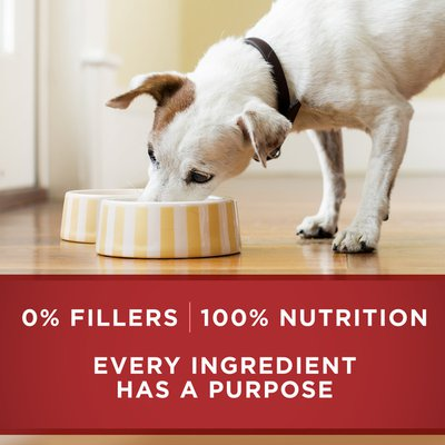 Purina ONE Natural Pate Wet Dog Food, SmartBlend Chicken & Brown Rice Entree