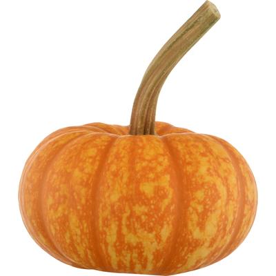 Bay Baby Produce Pumpkin, Sparkler
