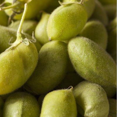 Organic Fresh Garbanzo Beans