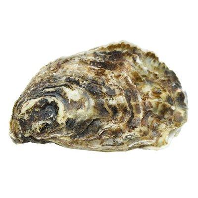 Medium Live Farm Raised Pacific Oysters