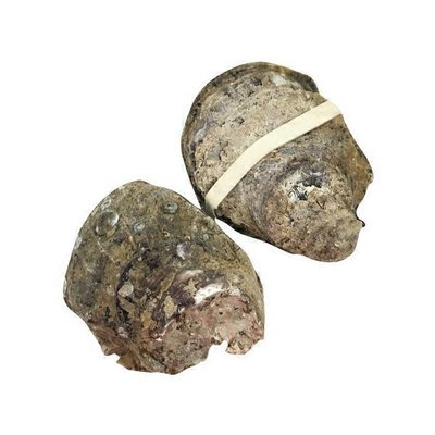 Fresh In The Shell Oysters