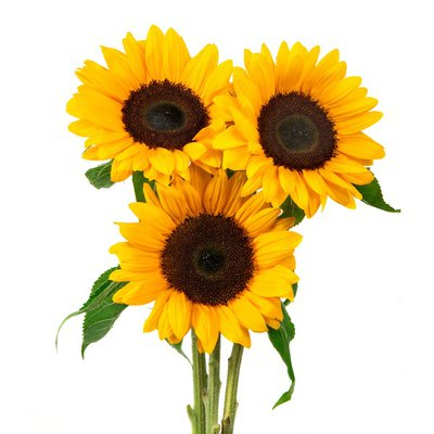 5 Stem Sunflowers