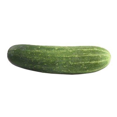 Pickling (Kirby) Cucumber
