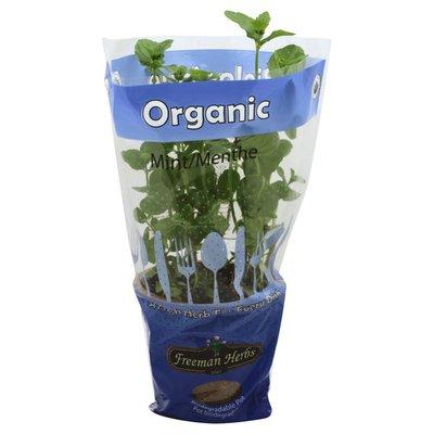 Freeman Herbs Mint, Organic