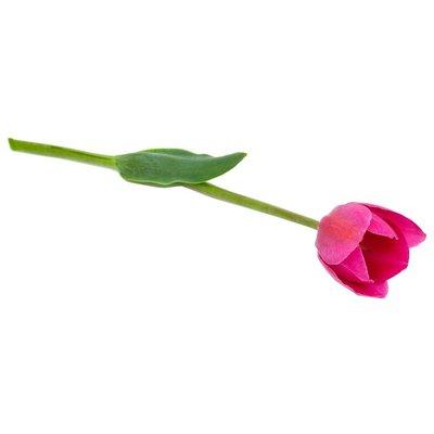 CB Greenhouse Tulip