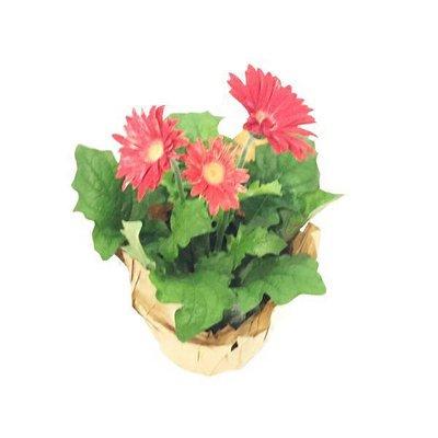 "Bayview Flowers 6"" Gerbera"