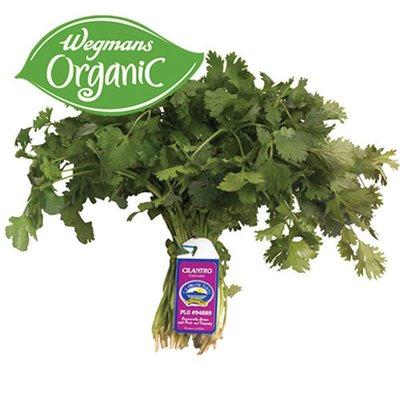 Organic Cilantro