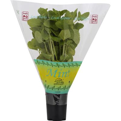 North Shore Living Herbs Mint