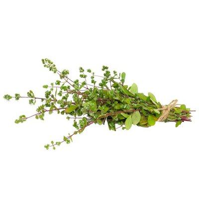 North Shore Living Marjoram Herbs