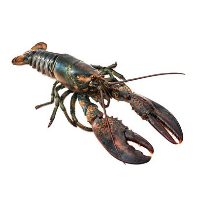 Baja Lobster