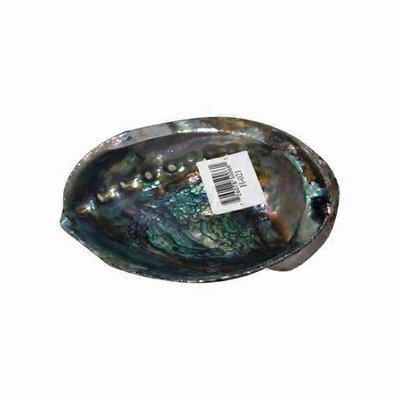 Windrose Large Abalone Shell
