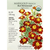 Botanical Interests Seeds, Marigold, French, Red Metamorph