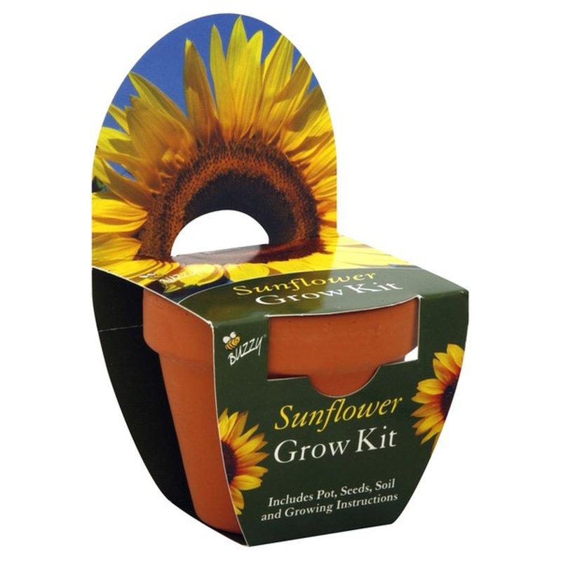 Buzzy Grow Kit, Sunflower