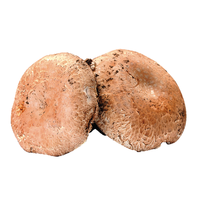 Dried Portabello Mushrooms