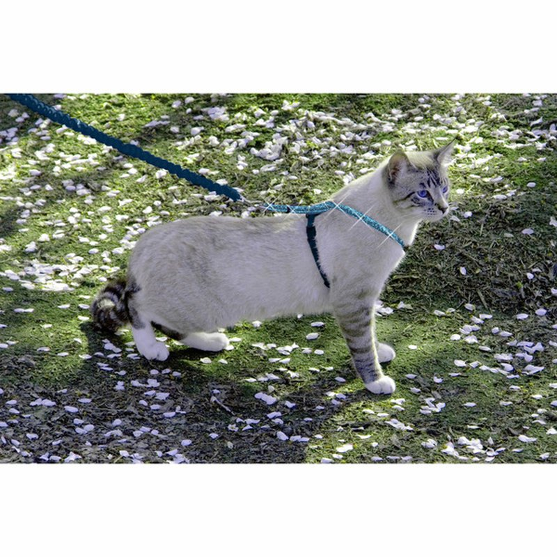 Pet Safe  Come with Me Large Kitty Glitter Harness & Bungee Cat Leash