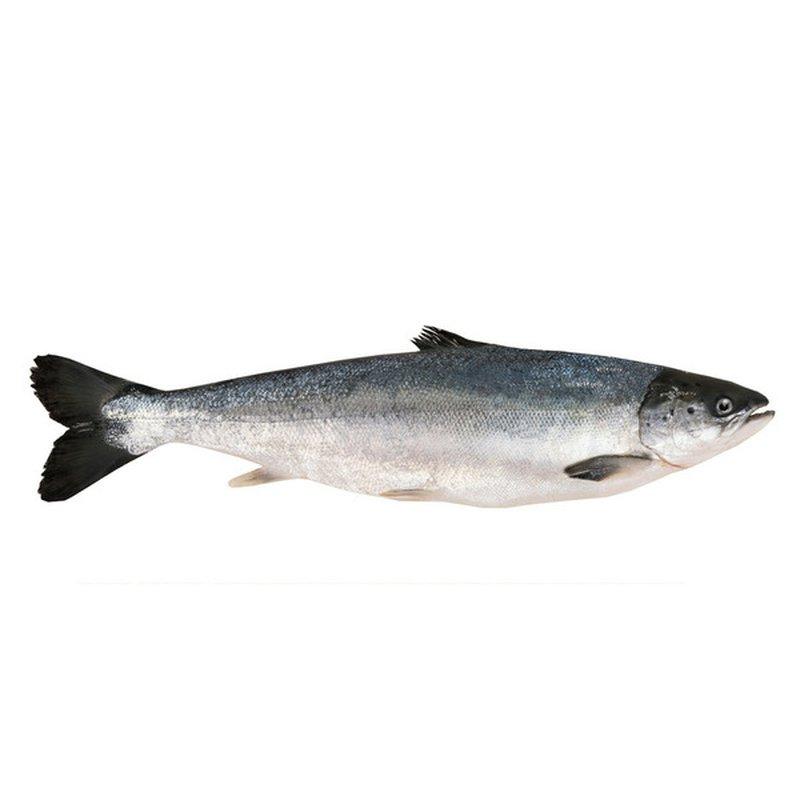 Salmon Whole Farm Raised